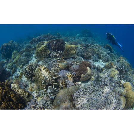 Image of Reef top seascape in Bunaken National Park Sulawesi Indonesia Canvas Art - Steve JonesStocktrek Images (36 x 23)