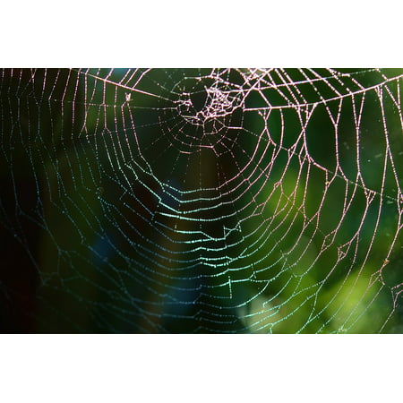 Peel-n-Stick Poster of Rain Spider Web Web Animal Spider Net Drop Poster 24x16 Adhesive Sticker Poster Print