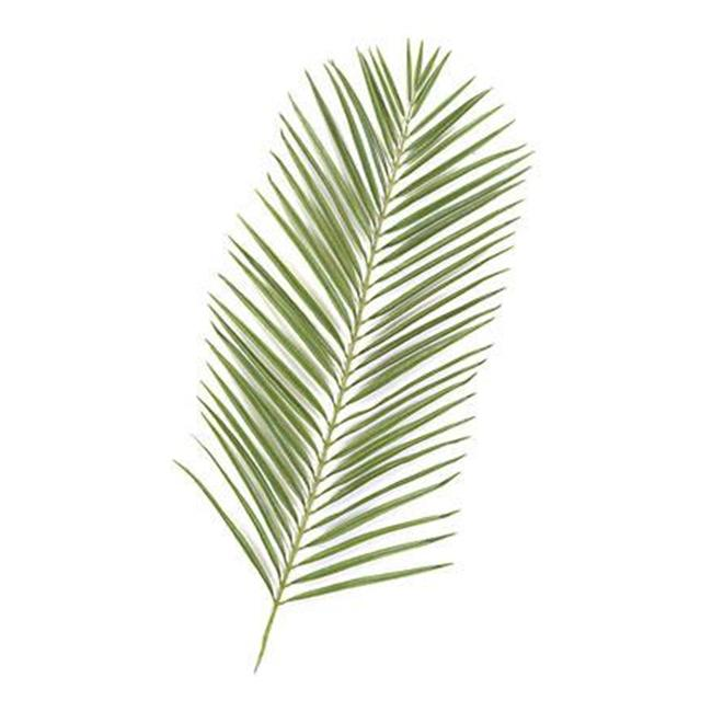 Autograph Foliages P-2682 - 46 Inch Areca Palm Branch - Two-Tone Green - Dozen