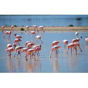 Canvas Print Pink Water Drink Flamingos Flamingos In The Nature Stretched Canvas 10 x 14
