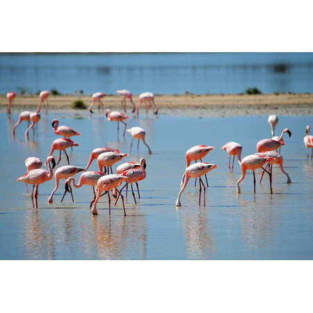Framed Art For Your Wall Pink Water Drink Flamingos Flamingos In The Nature 10x13 Frame