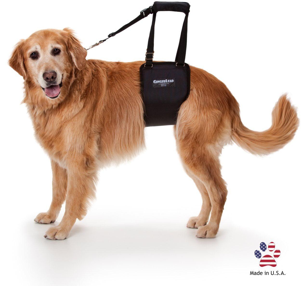 GingerLead Dog Support & Rehabilitation Harness - Large F...
