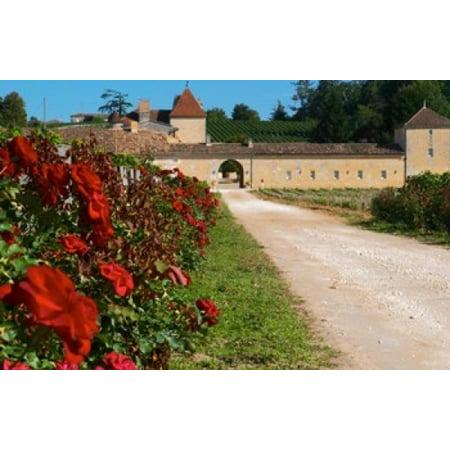 Chateau Grand Mayne Vineyard and Roses Poster Print by Per Karlsson