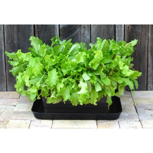 UrBin Grower - Self-Watering Container System