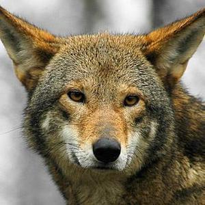Endangered Animals - eBook