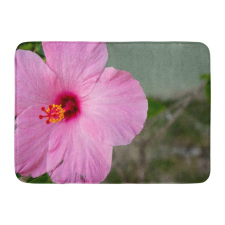 GODPOK Beautiful Colorful Ambergris Close Up of Pink Hibiscus Flower with Deep Fuschia Throat Green Caye Beauty Rug Doormat Bath Mat 23.6x15.7 inch (Pink Hibiscus)