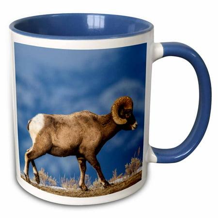 3dRose Bighorn sheep ram in Yellowstone National Park, Wyoming, USA. - Two Tone Blue Mug, 11-ounce