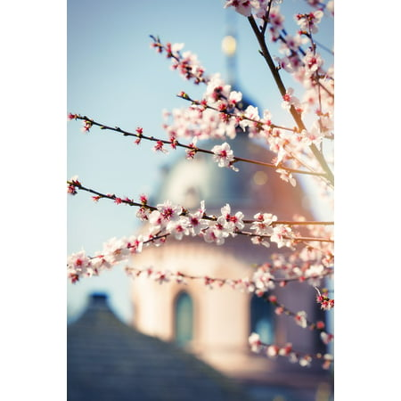 canvas print magnolia spring blossom tree bloom bush bloom stretched canvas 10 x -
