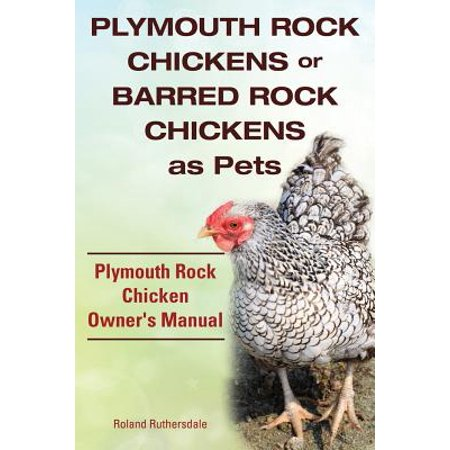 Plymouth Rock Chickens or Barred Rock Chickens as Pets. Plymouth Rock Chicken Owner's -
