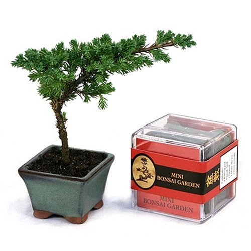 Bonzai Kits (Mini Bonsai Kit), The Bonsai Garden has everything you need to practice... by