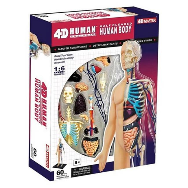 Tedco Toys 26085 4D Human Anatomy Half Cleared Human Body