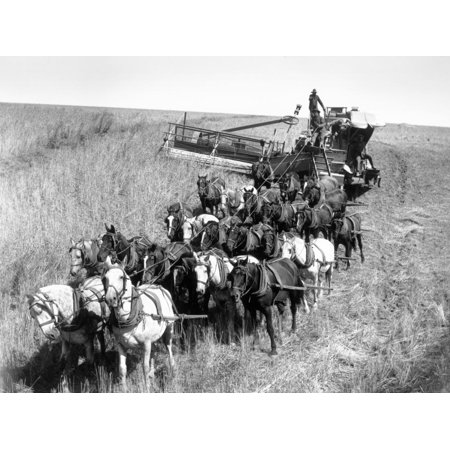 Farmers Use Horse Driven Harvester Print Wall Art