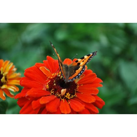 LAMINATED POSTER Close Flower Blossom Butterfly Bloom Macro Poster Print 24 x 36