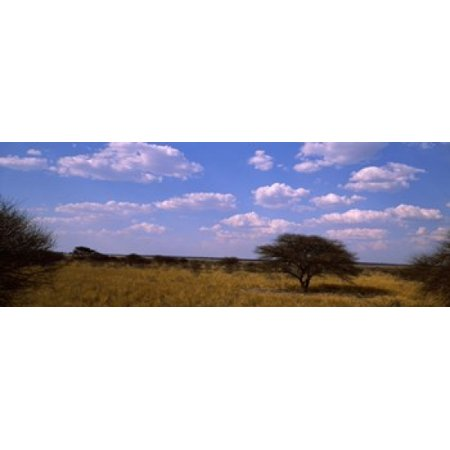 Landscape view of arid savannah in the dry season Central Kalahari Game Reserve Botswana Canvas Art - Panoramic Images (36 x 12)