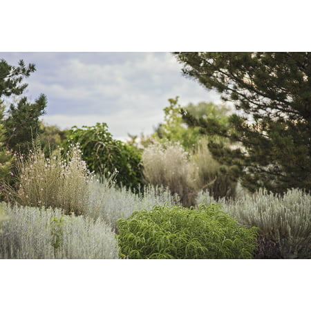 Canvas Print Nature Calm Gradient Peaceful Trees Green Stretched Canvas 10 x 14
