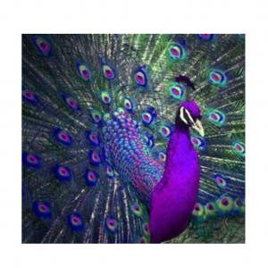 KABOER 5D DIY Full Drill Embroidery Diamond Painting Cross Stitch Rhinestone Peacock Opening Pattern Lifelike Gorgeous Handmade Artwork Wall Cabinet Livingroom Bedroom Art Craft Decor( 12*12inches)