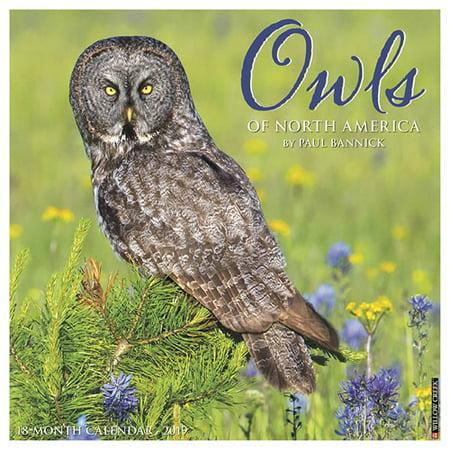 Willow Creek Press 2019 Owls Wall - Owl Calendar