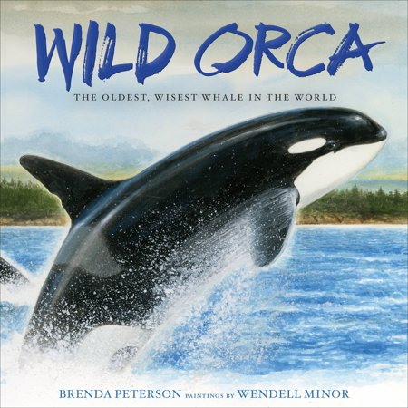 Wild Orca: The Oldest, Wisest Whale in the World (Hardcover) Pictures Orca Whales
