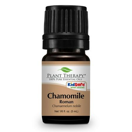 Plant Therapy Chamomile Roman Essential Oil 5 Ml  1 6 Fl  Oz   100  Pure  Undiluted  Therapeutic Grade