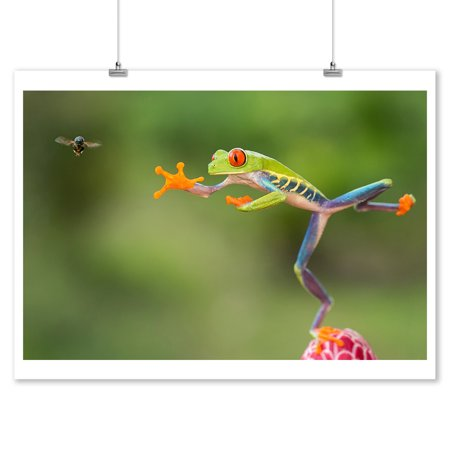 Tree Frog Leaping for Fly - Lantern Press Photography (9x12 Art Print, Wall Decor Travel Poster)