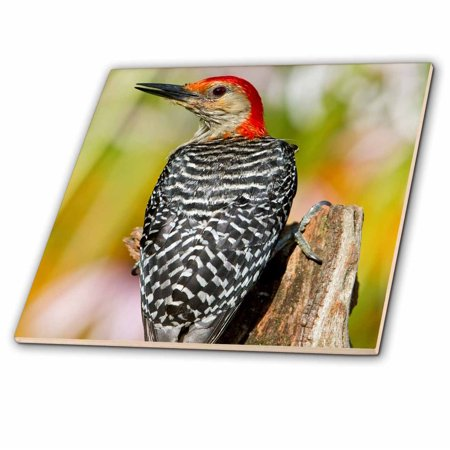 3dRose Red-bellied Woodpecker on fence post in flower garden, Marion Co. IL - Ceramic Tile, 6-inch - Ceramic Flower
