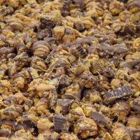 Peanut Butter Cup Popcorn - Gallon Bag,Each