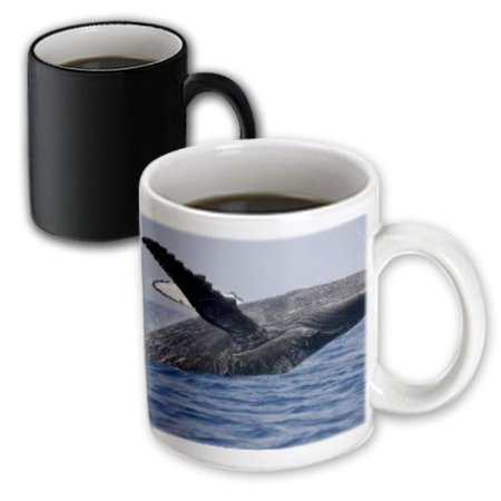 3dRose Hawaii, Big Island, Humpback Whale breaching - US12 PSO0005 - Paul Souders, Magic Transforming Mug, 11oz