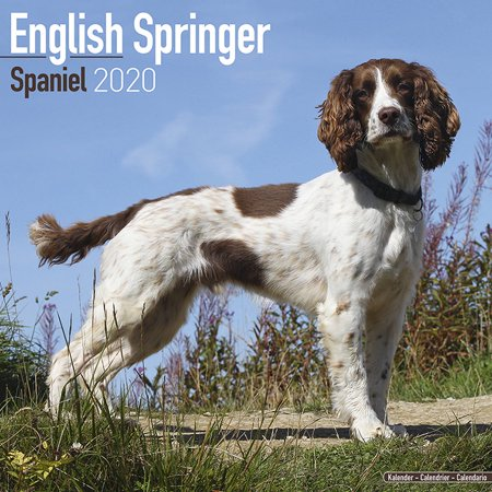 Cocker Spaniels 2010 Calendar (English Springer Spaniel (Euro) Calendar 2020 - English Springer Spaniel Dog Breed Calendar - English Springer Spaniels Premium Wall Calendar 2020 )