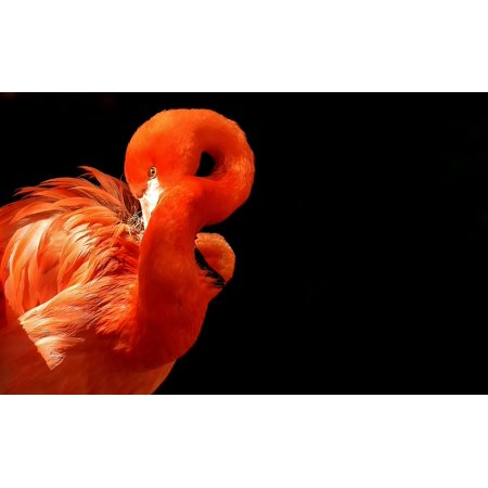 Laminated Poster Flamingo Birds Colorful Water Bird Plumage Animals Poster Print 24 X 36