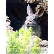 Rabbit's Coming Spring House Flag Evergreen Decorative Bunny Rabbits Wildlife
