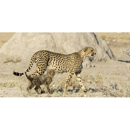 Namibia, Etosha National Park. Cheetah mother and cub. Print Wall Art By Jaynes Gallery for $<!---->