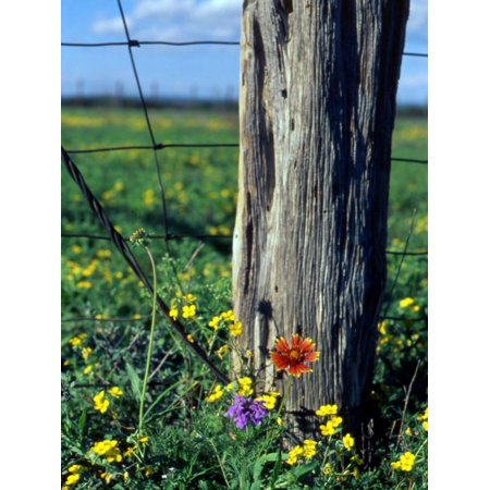 Early Spring Flowers, Fence Post, TX Print Wall Art By Rebecca Marvil - Halloween Store Spring Tx