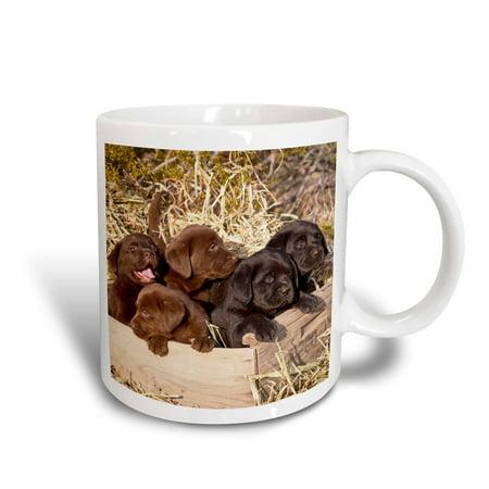3dRose Five Labrador Retriever puppy dogs - NA02 ZMU0160 - Zandria Muench Beraldo - Ceramic Mug, (Retriever Ceramic Mug)
