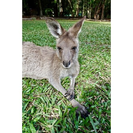 Framed Art for Your Wall Wallaby Face Australia Sitting Kangaroo Marsupial 10x13 (Cool Frames Australia)