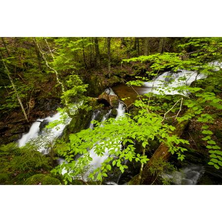 Nova Waterfall - Spring waterfalls on Horse Pasture Brook Wentworth Valley Nova Scotia Canada Poster Print by Irwin Barrett  Design Pics