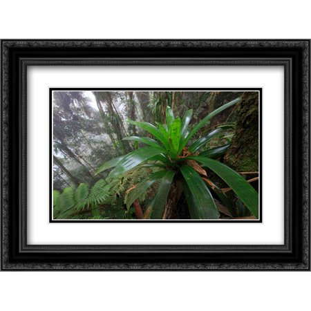 Bromeliad and tree fern at 1600 meters altitude in tropical rainforest, Sierra Nevada de Santa Marta 2x Matted 24x18 Black Ornate Framed Art Print by Ruoso, Cyril
