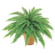 24. 5 Inch Boston Fern Bush - Qty of 4