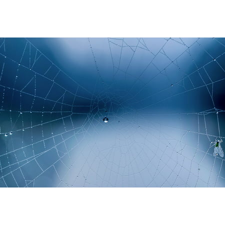Canvas Print Dew Spider Webs Autumn Morning Winter Blue Hour Stretched Canvas 10 x 14 - Blue Spider Web