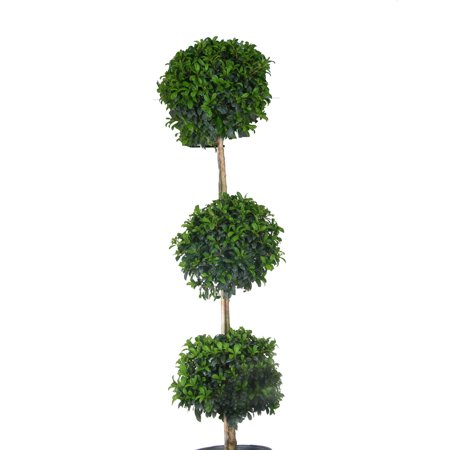 Image of Costa Farms Eugenia Topiary 3 Ball 10IN