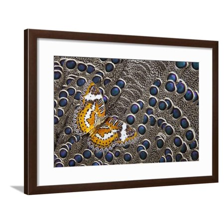 Lacewing Butterfly on Grey Peacock Pheasant Feather Design Framed Print Wall Art By Darrell Gulin