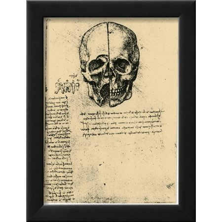 Anatomical Sketch of a Human Skull, C1472-1519 Framed Print Wall Art ...