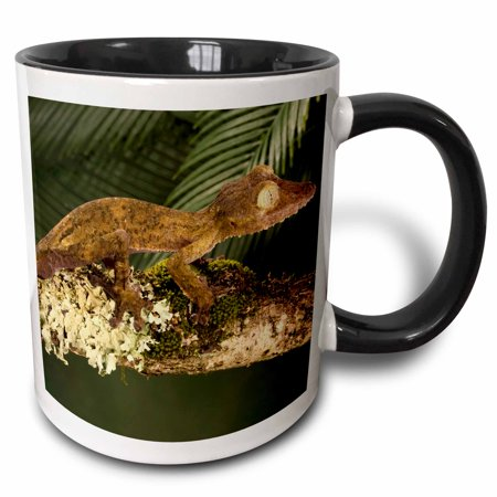 3dRose Fringed Leaf-tail Gecko lizard Madagascar - US39 JMC0030 - Joe and Mary Ann McDonald - Two Tone Black Mug, 11-ounce