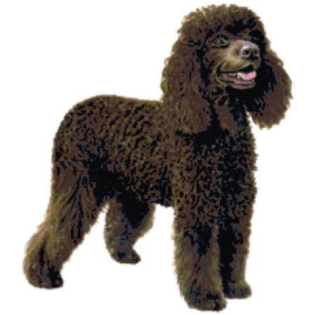 Irish Water Spaniel Dog Counted Cross Stitch (Spaniel Needlepoint)