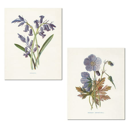 Lovely Old-Fashioned Botanical Meadow Cranes-Bill and Hyacinth Set by Gwendolyn Babbitt; Floral Decor; Two 11x14in Poster Prints (Old Botanical Prints)