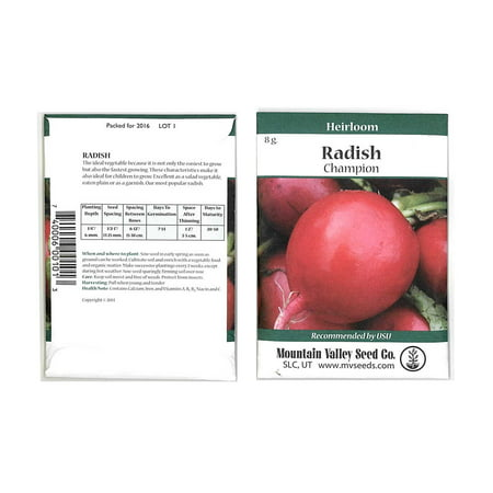 Champion Radish Seeds - 8 Gram Seed Packet - Heirloom Garden Seeds, Non-GMO, AAS Winner - Vegetable Gardening and Microgreens