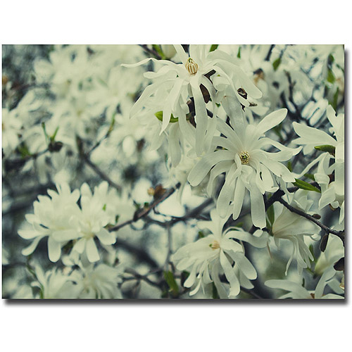 "Trademark Fine Art ""Full Bloom"" Canvas Wall Art by Ariane Moshayedi"