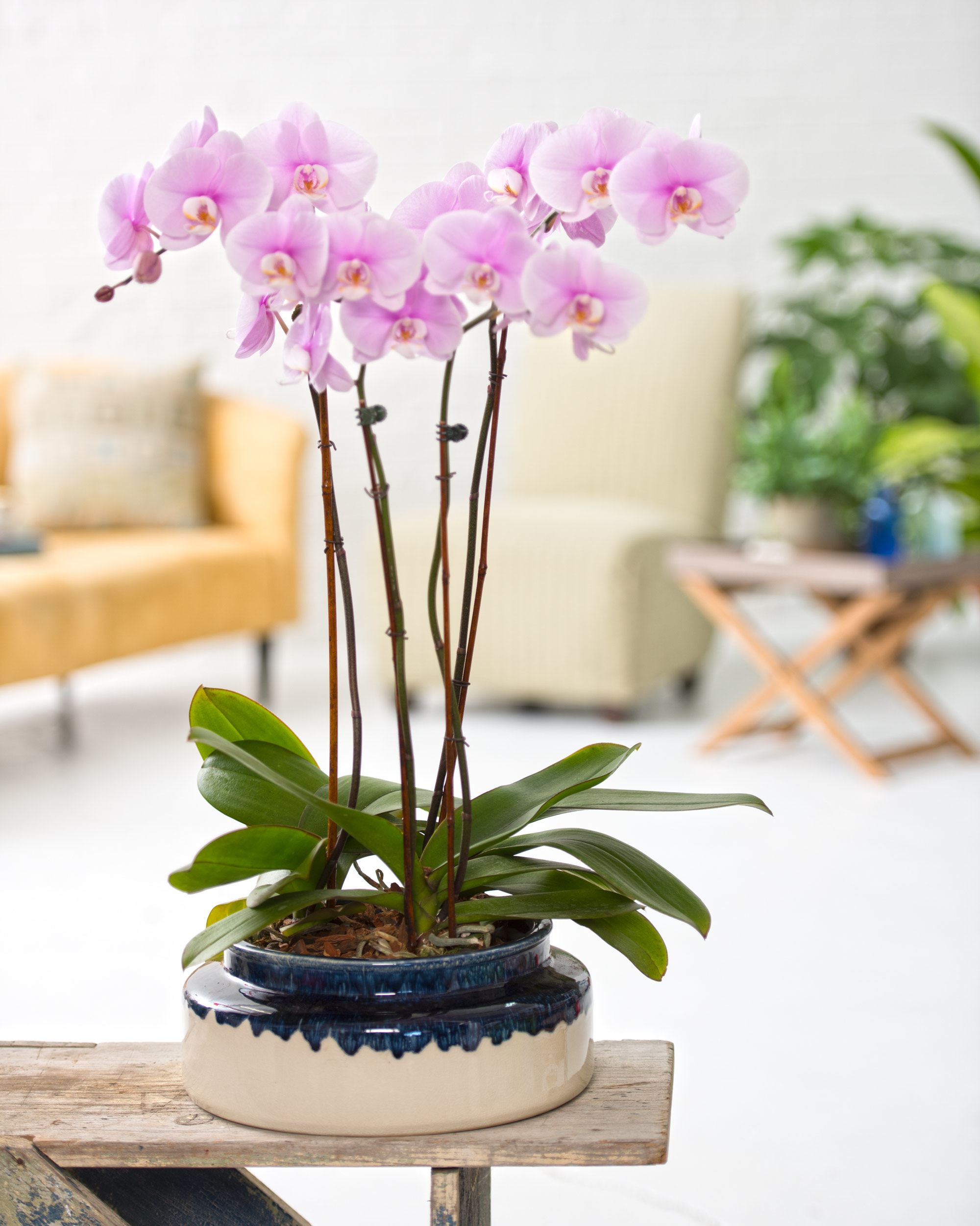 Short Kennebunk Ceramic Orchid Cachepot by