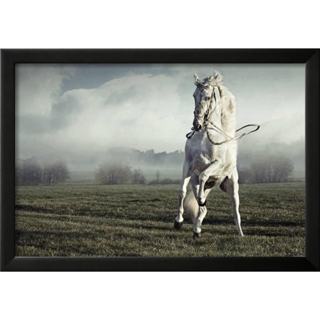 Wild White Horse Framed Print Wall Art By conrado - Walmart.com