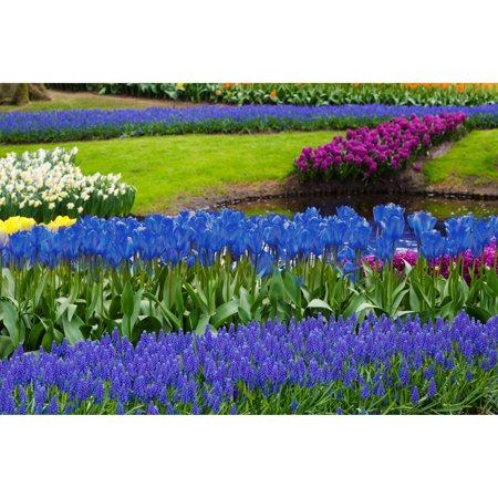 Eco Collection Cereal - Touch Of ECO Blue Flower Garden Mixed Bulb Collection