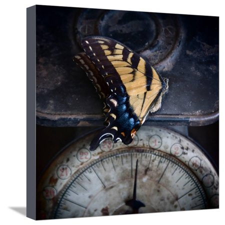 The Last Flight Stretched Canvas Print Wall Art By Janet Matthews